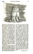 Side 539