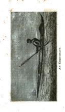 Side 428